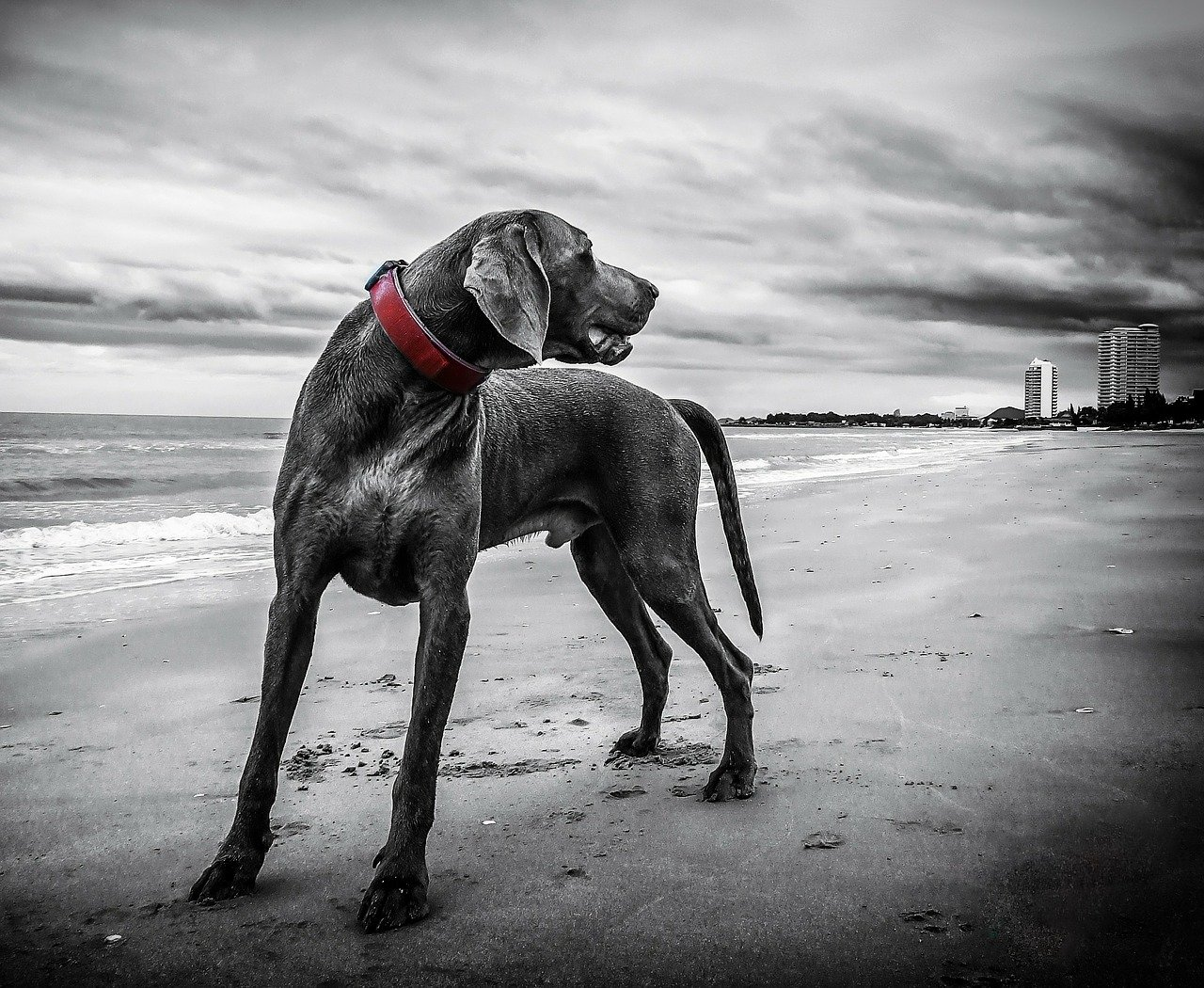 Dog Trainer London