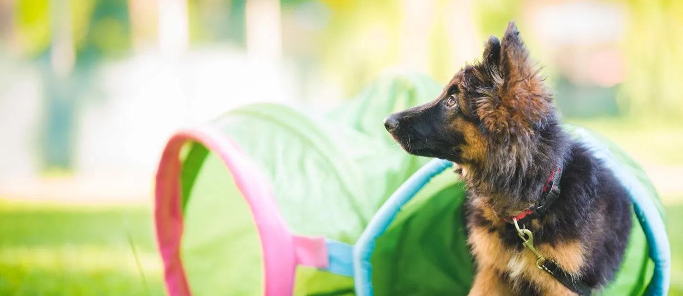 The Dog Training Method